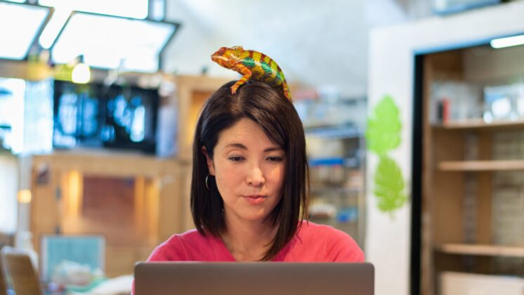 Image of a woman working on a laptop with a colorful chameleon on her head, suggesting creativity as she works remotely