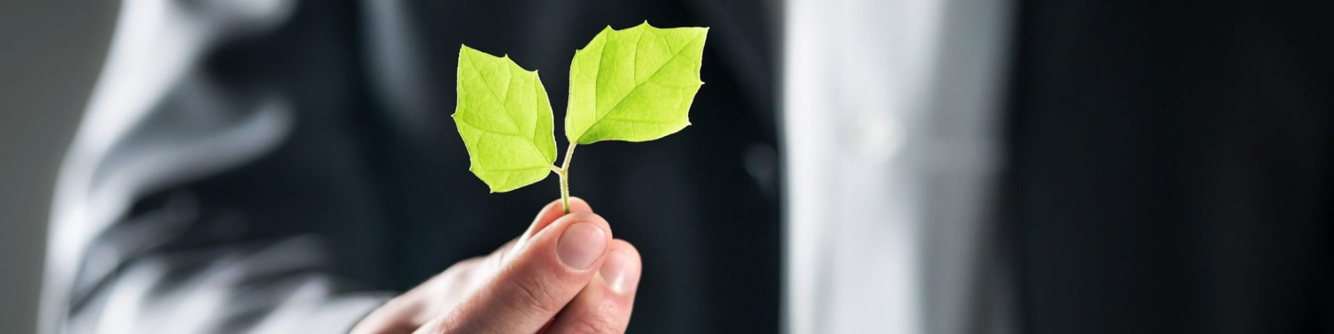 Businessman hoping to support the circular economy holds up small green leaf