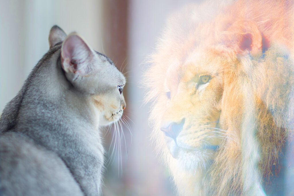 You may struggle to impact your audience if you're a cat with the self-image of a lion.